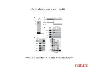 H Omran  et al. Nature 456 , 611-616 (2008) doi:10.1038/nature07471