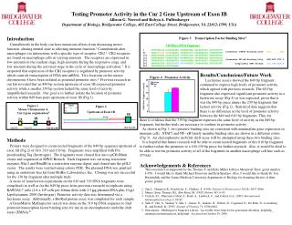 Testing Promoter Activity in the Cnr 2 Gene Upstream of Exon IB  Allison G. Norrod and Robyn A. Puffenbarger Department