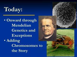 Today:  Onward through 	Mendelian 	Genetics and 	Exceptions  Adding 	Chromosomes to 	the Story