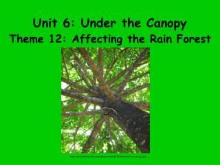 Unit 6: Under the Canopy