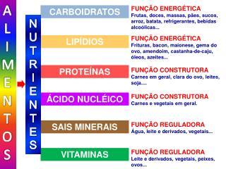 FUNÇÃO REGULADORA Leite e derivados, vegetais, peixes, ovos...