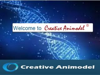 Creative Animodel An Inroduction To A Biomedical Research Or
