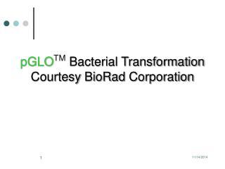 pGLO TM  Bacterial  Transformation Courtesy  BioRad  Corporation