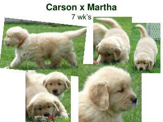 Carson x Martha 7 wk's