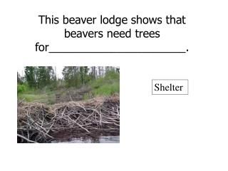 This beaver lodge shows that beavers need trees for______________________.