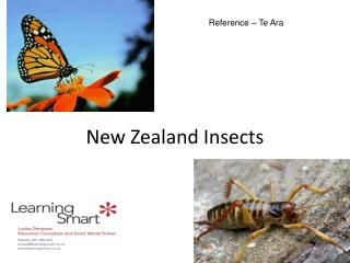New Zealand Insects