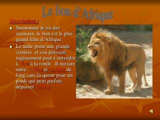 Description : Surnommé le roi des animaux, le lion est le plus grand félin d'Afrique.