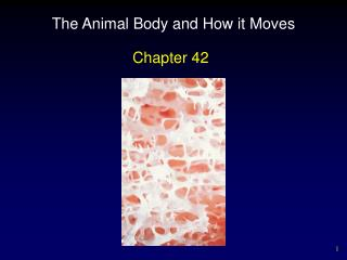The Animal Body and How it Moves