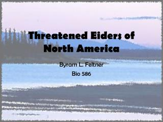 Threatened Eiders of North America