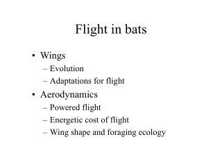 Flight in bats