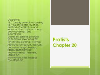 Protists Chapter 20