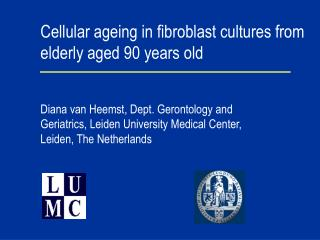 Cellular ageing in fibroblast cultures from elderly aged 90 years old