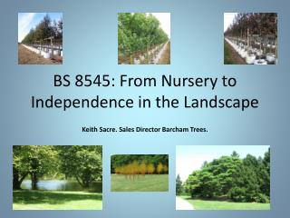 BS 8545: From Nursery to Independence in the Landscape