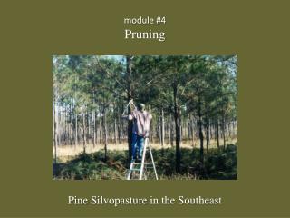 module #4 Pruning