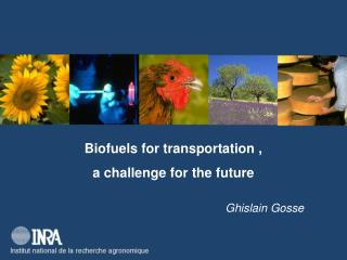 Biofuels for transportation ,  a challenge for the future