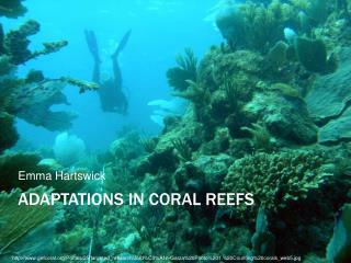 Adaptations in coral reefs
