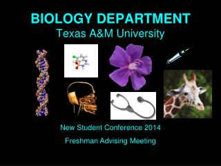BIOLOGY DEPARTMENT Texas A&M University