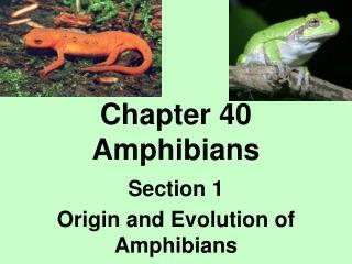 Chapter 40 Amphibians