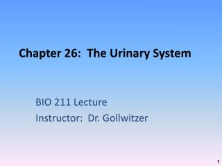 Chapter 26:  The Urinary System