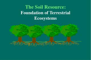 The Soil Resource: Foundation of Terrestrial Ecosystems
