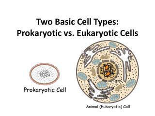 Two Basic Cell Types: Prokaryotic vs. Eukaryotic Cells