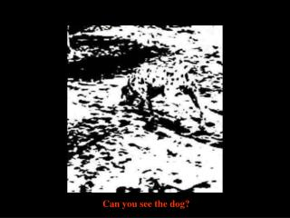Can you see the dog ?