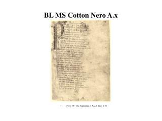 BL MS Cotton Nero A.x