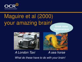 Maguire et al (2000)  your amazing brain!