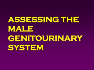 ASSESSING THE MALE GENITOURINARY SYSTEM