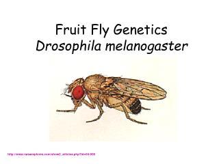 Fruit Fly Genetics Drosophila melanogaster