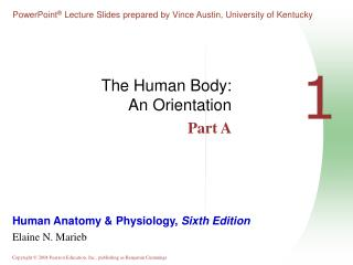 The Human Body: An Orientation Part A