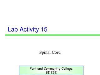 Lab Activity 15
