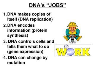 """DNA's """"JOBS"""""""