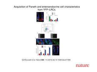 Acquisition of Paneth and enteroendocrine cell characteristics from YFP–LRCs.