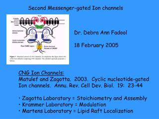 Second Messenger-gated Ion channels