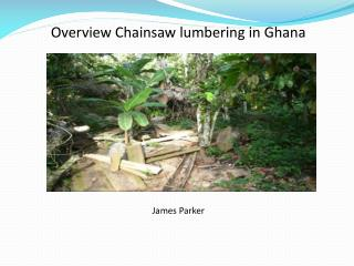 Overview Chainsaw lumbering in Ghana        by    James Parker