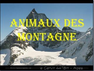 ANIMAUX DES MONTAGNE