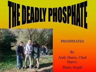 PHOSPHATES By  Andy Harris, Chad Harris,  Shane Stigall