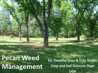 Pecan Weed Management