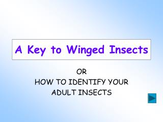 A Key to Winged Insects