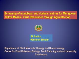 Department of Plant Molecular Biology and Biotechnology,