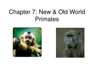 Chapter 7: New & Old World Primates