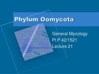 Phylum Oomycota