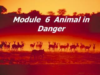 Module  6  Animal in Danger