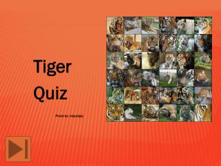 Tiger  		Quiz 			Photo by: robynejay