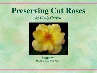 Preserving Cut Roses by Cindy Garrett