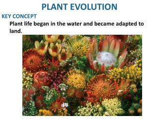 PLANT EVOLUTION KEY CONCEPT Plant life began in the water and became adapted to land.