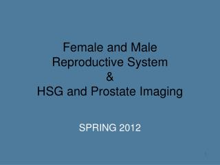 Female and Male  Reproductive System  & HSG and Prostate Imaging