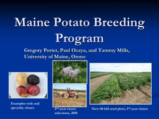 Maine Potato Breeding Program