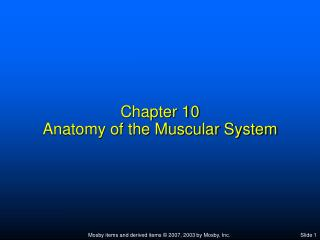 Chapter 10 Anatomy of the Muscular System